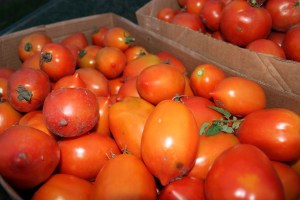 The tomatoes were a little dirty at harvest this week due to the recent rain. We had 8/10ths of an inch early Tuesday.