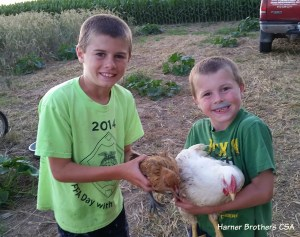 The Harner Brothers have been raising broilers (meat) chickens (white feathers). The chicken is naturally muscular because of the type of breed. NO hormones were given to the chickens. It is illegal in the U.S. to use growth hormones or steroids in any poultry production. It is interesting to observe how differently the chickens of different breeds grow. The brown feathered chicken is the same age just an egg laying breed so its energy will go into making eggs in a few months vs. into making muscle.