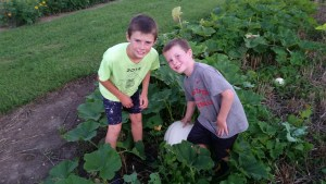 Finding the treasures in the garden like the largest white pumpkin that we have found yet. It's so fun to see what is hiding under the large pumpkin leaves.