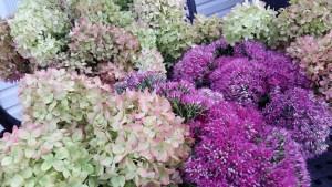 Hydrangeas and Sedums are tonight's arrangement.