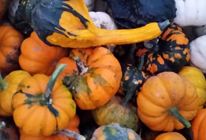 cropped-gourds.jpg
