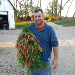 Harvesting carrots in November that are this beautiful is very unusual.