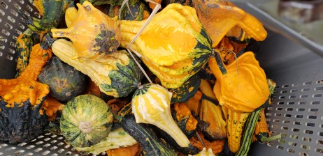 What a variety of gourds we have this year. We do have extra for those interested in purchasing some.