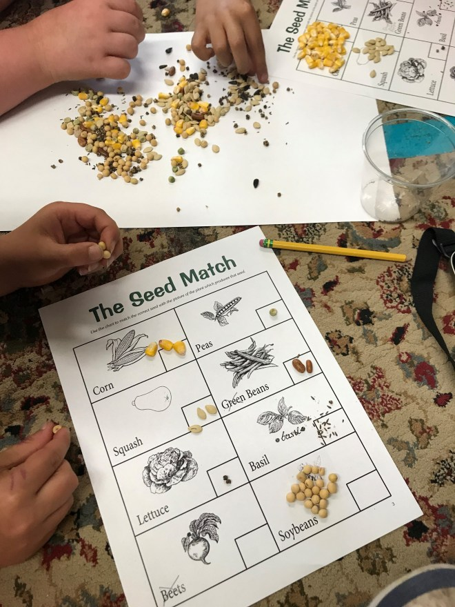 5-21-19 seed sorting in 3rd grade