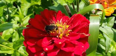 Beautiful pollinators this week