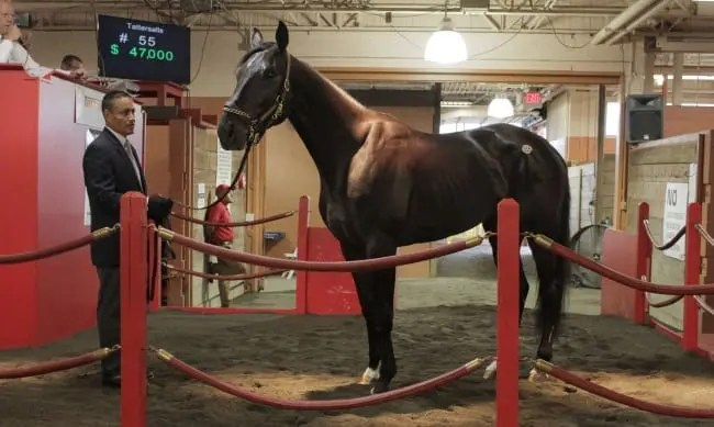 Three-year-old trotting colt Coughlin, a recent winner of a New York Excelsior event at Tioga Downs, fetched a sale-topping bid of $65,000 from Vito Cucci of Belmar, NJ