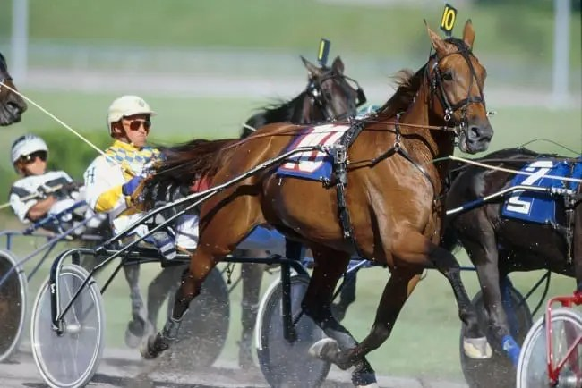 Moni Maker (Wally Hennessey) tops the Curmudgeon's list of greatest female trotters of all time. | Dave Landry