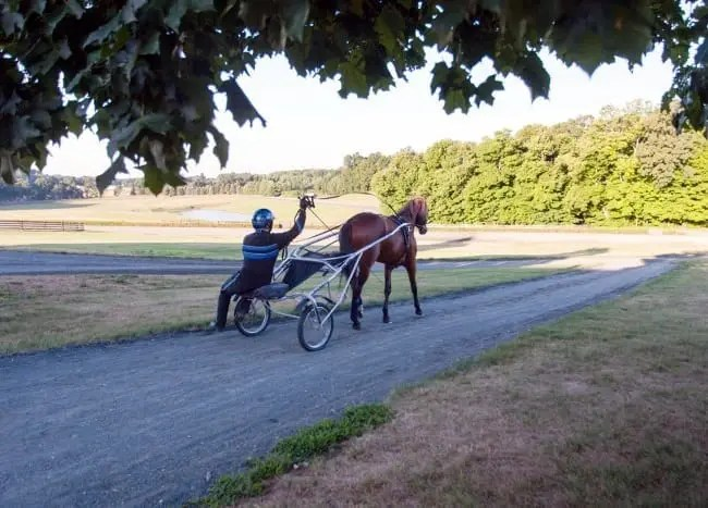 Thinking globally. Lindy Farms took a European approach to its five-eighths mile training track and straight track through the woods.