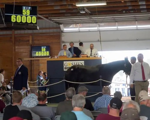 As predicted by Murray Brown, Vecellio Hanover topped the Goshen Yearling Sale thanks to a bid of $60,000 by Eugene Kurzrok. | Jim Gillies