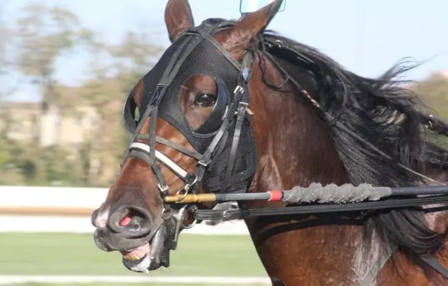 Marion Marauder is the first horse to win the Trotting Triple Crown since 2006. | Jay Wolf