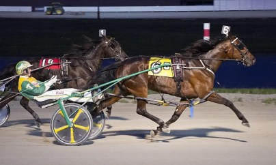 Brad Conrad | Sophomore filly pacer McPansy (Trace Tetrick) is one of 14 Brian Brown trainees in Ohio Sires Stake Final action tonight at Scioto Downs.