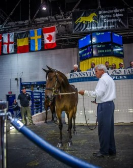 Triscari Video Web and Marketing | The Muscle Hill—Thatsnotmyname filly Fifty Cent Piece was purchased for $500,000 by SRF Stable of Sweden.