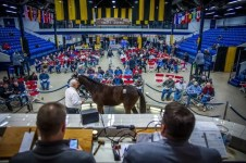 Triscari Video Web and Marketing | The Standardbred Horse Sales Company yearling sale concluded Wednesday with an all-time record for average of $42,675.