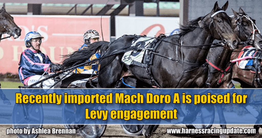 Recently imported Mach Doro A is poised for Levy engagement
