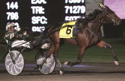 Claus Andersen | Maven (Yannick Gingras, shown winning the Breeders Crown in 2012 at Woodbine) has been, likely, the best horse Donovan has owned.