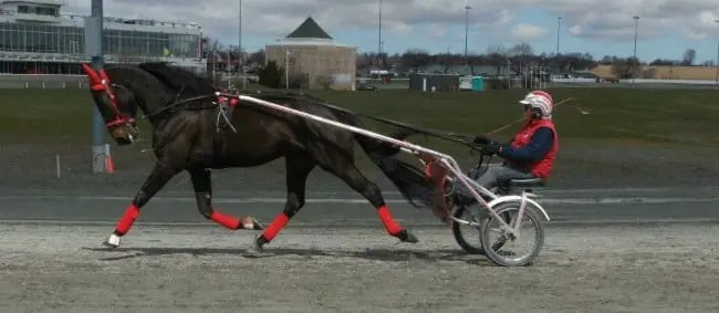 Courtesy Rachel Andrew | The late Brian Andrew jogging stallion Neal at Red Shores Charlottetown.
