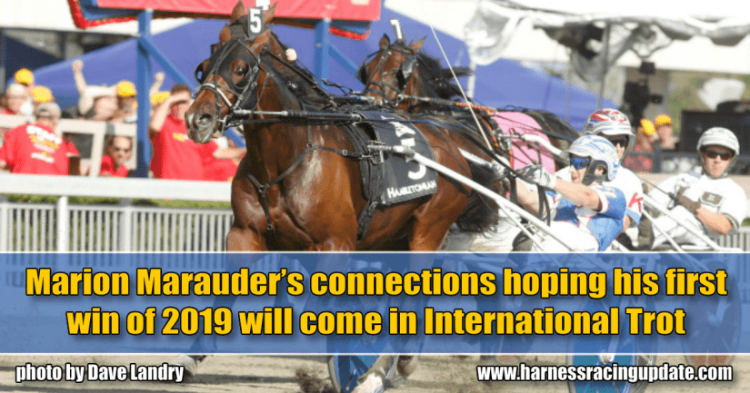 Marion Marauder's connections hoping his first win of 2019 will come in International Trot