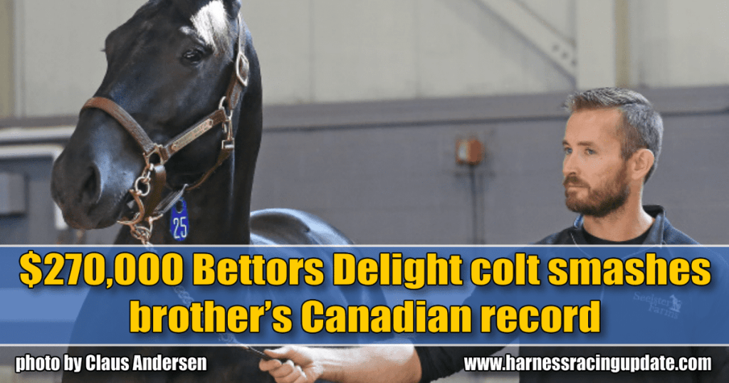 $270,000 Bettors Delight colt smashes brother's Canadian record