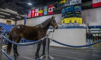 Triscari Video Web and Marketing   Hip 1052 broodmare Celebrity Ruth was the third highest mare sold on the first day of the mixed sale. She sold for $400,000 to Megan Velardo, agent, out of the White Birch Farms / Preferred Equine consignment.