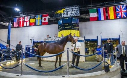Triscari Video Web and Marketing | The second-highest priced yearling sold was Hip 456 Delayed Hanover, a Southwind Frank colt out of Dont Wait Up that sold for $230,000 to Ake Svanstedt out of the Hanover Shoe Farms consignment.