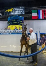 Triscari Video Web and Marketing | The second-session topper was hip 462 Make My Deo, an American Ideal colt out of Electric Fool that sold for $280,000 to Bill Peshina's Royal Wire Products. The colt was bred by Deo Volente Farms and consigned by Preferred Equine.