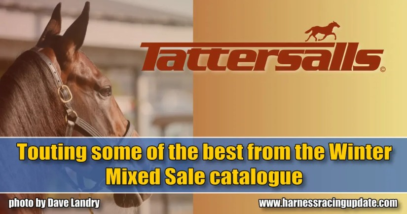 Touting some of the best from the Winter Mixed Sale catalogue