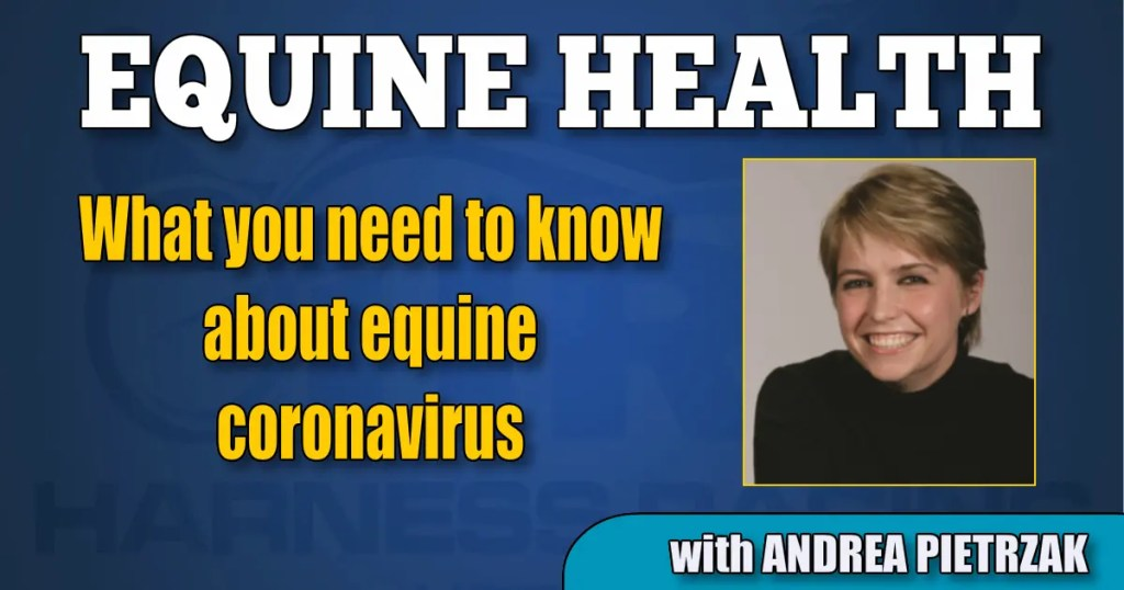 What you need to know about equine coronavirus