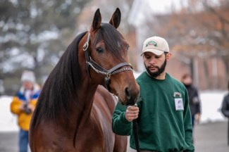 John Watkins | Stag Party is one of four new stallions to the Winbak Farm of Ontario lineup, including Jimmy Freight, McWicked and The Bank.