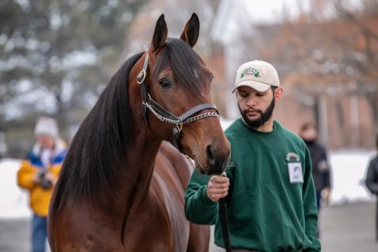 John Watkins   Stag Party is one of four new stallions to the Winbak Farm of Ontario lineup, including Jimmy Freight, McWicked and The Bank.