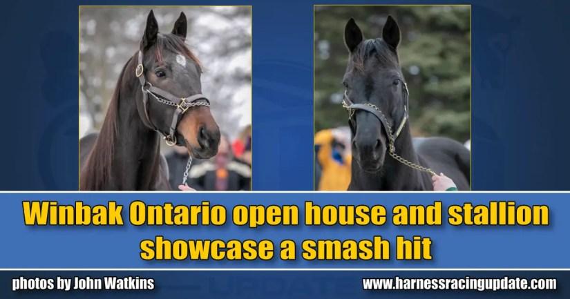 Winbak Ontario open house and stallion showcase a smash hit