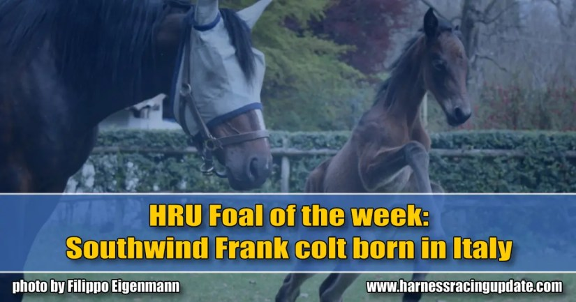 Southwind Frank colt born in Italy