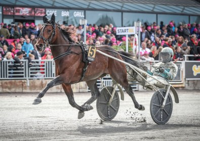 Mia Törnberg/Sulkysport | It will be the fifth straight Elitloppet for American-bred Propulsion, who will start from post eight in his heat on Sunday at Solvalla.