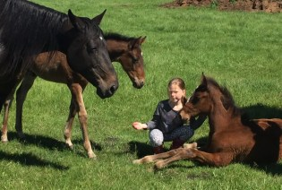 Courtesy Gordon Empey | Broodmares and babies at Cenalta Farms in Lacombe, AB.