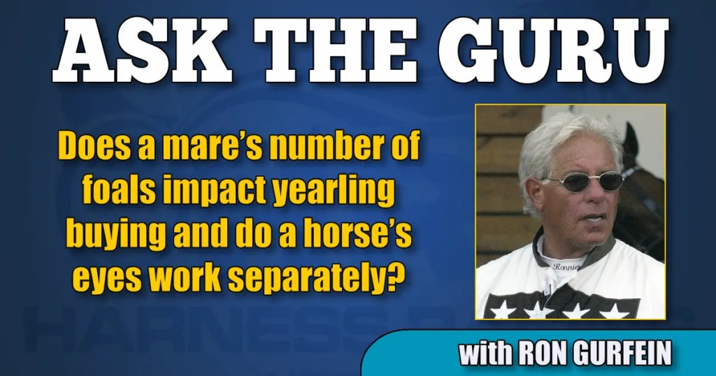 Does a mare's number of foals impact yearling buying and do a horse's eyes work separately?