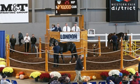 Claus Andersen | The London Selected Yearling Sale, normally held in the Agriplex at The Western Fair District, will be online only in 2020 due to the COVID-19 pandemic.