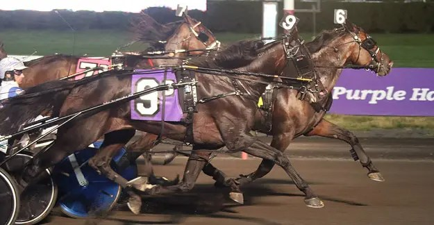 Lisa Photo | Marion Marauder (6, Scott Zeron) lowered his lifetime mark a full second to 1:50.2 Friday at The Meadowlands.