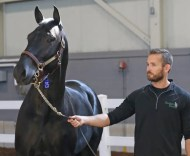 Claus Andersen | Seelster Farms' Walter Parkinson with Marlboro Seelster, who set an all-time record for a yearling sold at a Canadian auction when he was purchased for $270,000 by Jeffrey Snyder at the 2019 London Selected Yearling Sale.