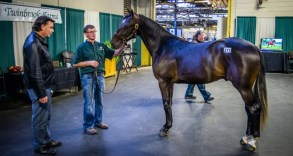 Triscari Video Web and Marketing | Twinbrook Farms' Rob McNiven shows a yearling to Jack Darling at the 2018 Standardbred Horse Sales Company sale in Harrisburg, PA.