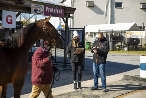 Triscari Video Web and Marketing | Julie and Any Miller inspecting a yearling at the Preferred Equine consignment. Preferred led all mixed sale consignors in gross sales.