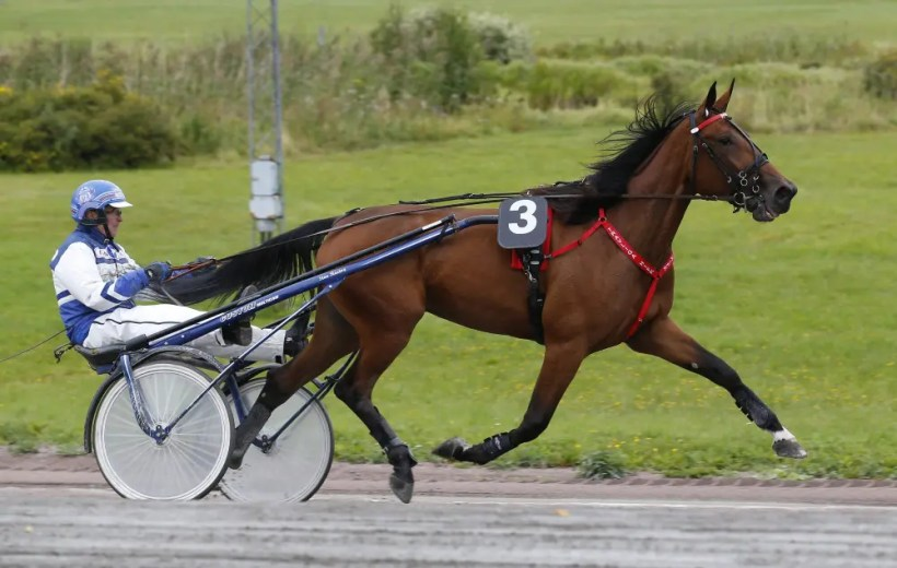 ALN | Finnish star Mascate Match makes an interesting start Sunday in the Swedish Breeders Crown before she will be sold at a sale in Finland on Dec. 30.