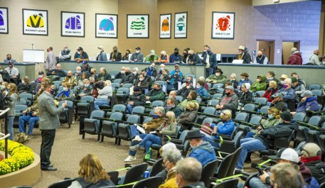 Triscari Video Web and Marketing   The (socially-distanced) auditorium at the Fasig-Tipton sales facility at the Maryland State Fairgrounds.
