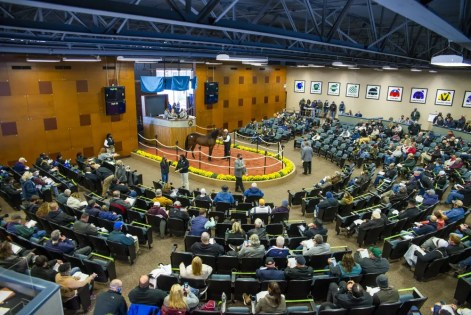 Triscari Video Web and Marketing | The Fasig-Tipton sales ring at the Maryland State Fairgrounds in Timonium, MD, the 2020 home of Standardbred Horse Sales Company's auction.