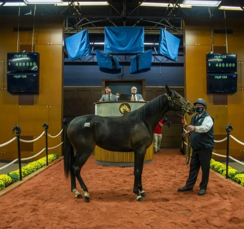 Triscari Video Web and Marketing | Concord Stud sold Hip #124 Tippet, a Muscle Hill filly out of Ilia to Nancy Takter, agent, for $400,000.