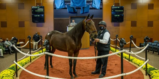 Triscari Video Web and Marketing | Hip #160 Nautical Hanover, the very first yearling sold Wednesday, topped the session with a bid of $180,000 by Tony Alagna. Nautical Hanover is a Captaintreacherous colt out of Naughty Marietta bred and consigned by Hanover Shoe Farms.