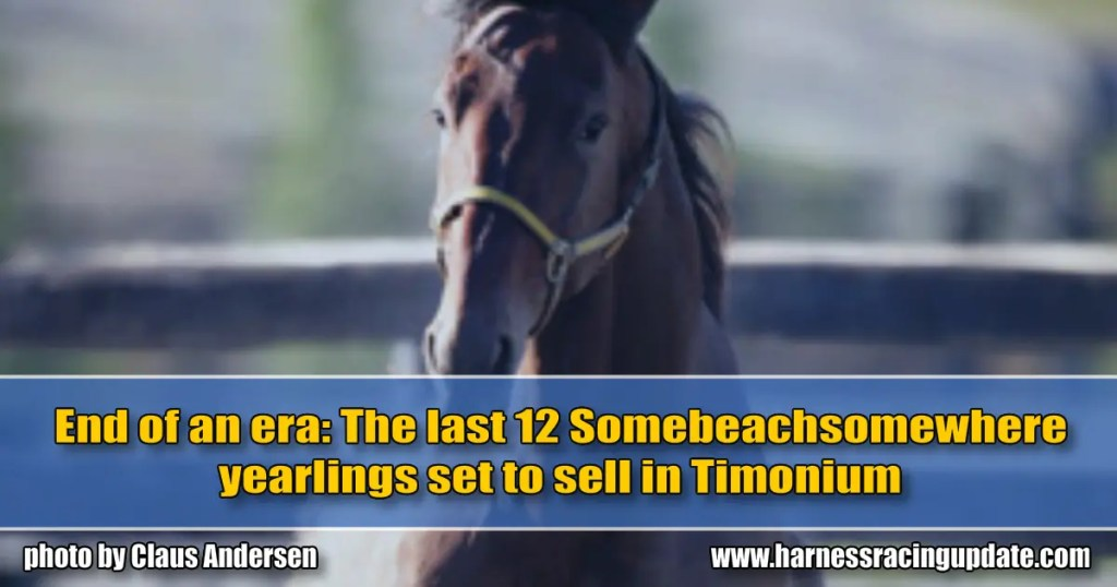 End of an era: The last 12 Somebeachsomewhere yearlings set to sell in Timonium