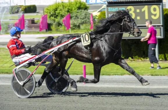 ALN   Manprinsen A.M. ahead of a start in the Elitkampen at Solvalla on Elitloppet Sunday in 2020.