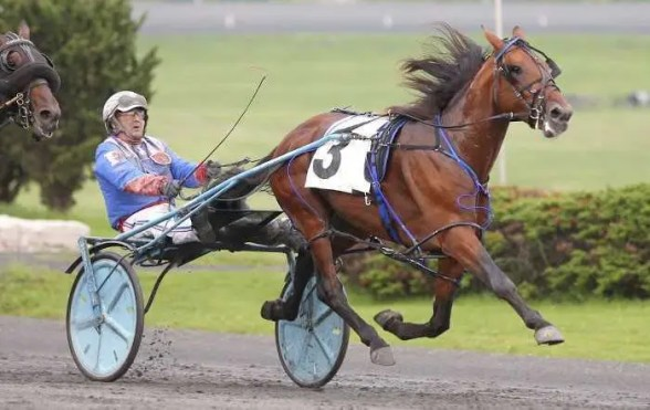 New Image Media   Century Farroh (Sylvain Filion, shown winning the Somebeachsomewhere in 2019) was named Canada's 2020 Horse of the Year.