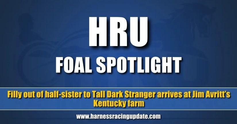 Filly out of half-sister to Tall Dark Stranger arrives at Jim Avritt's Kentucky farm