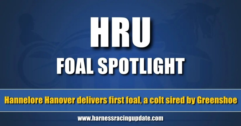 Hannelore Hanover delivers first foal, a colt sired by Greenshoe