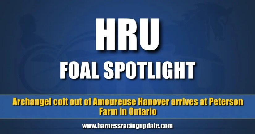 Archangel colt out of Amoureuse Hanover arrives at Peterson Farm in Ontario